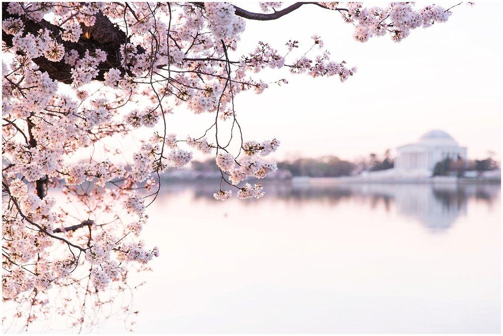 cherryblossom_washingtondc_spring_pink_0042.jpg