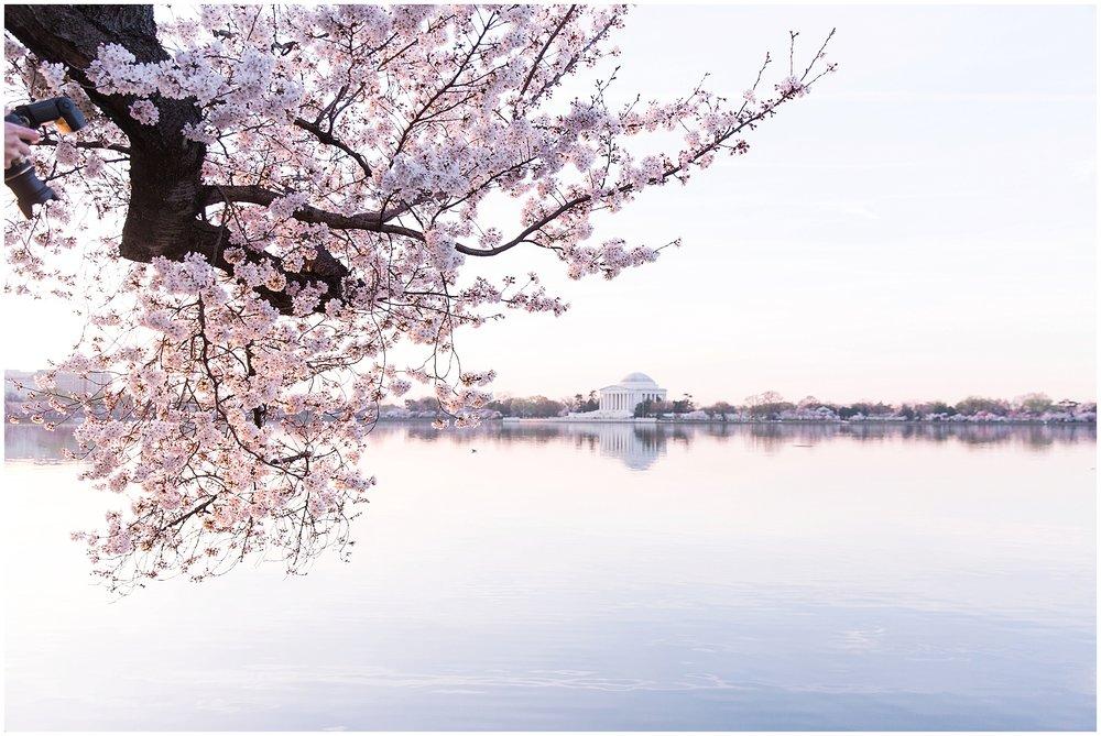cherryblossom_washingtondc_spring_pink_0044.jpg