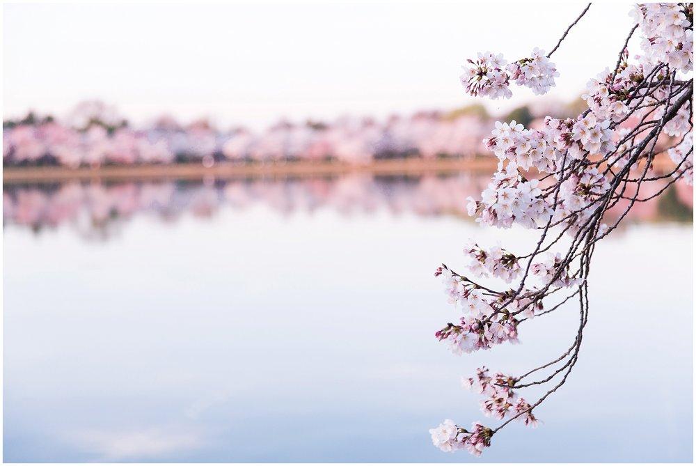 cherryblossom_washingtondc_spring_pink_0046.jpg