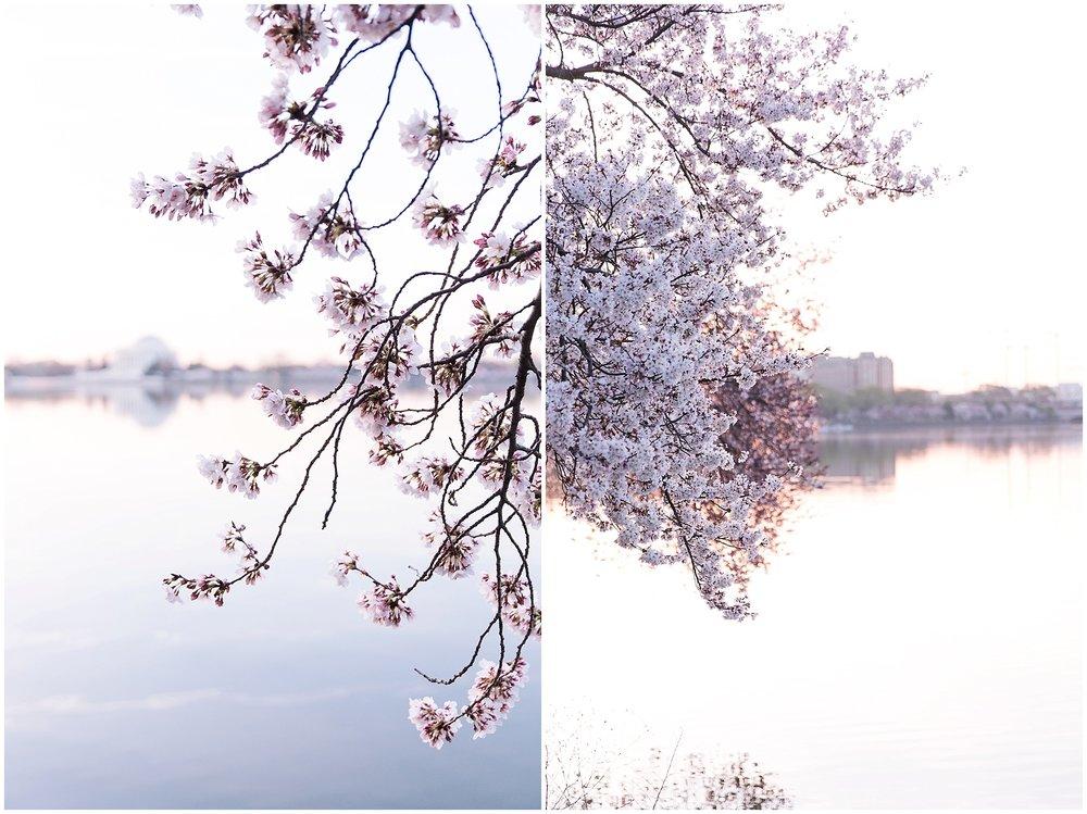 cherryblossom_washingtondc_spring_pink_0047.jpg