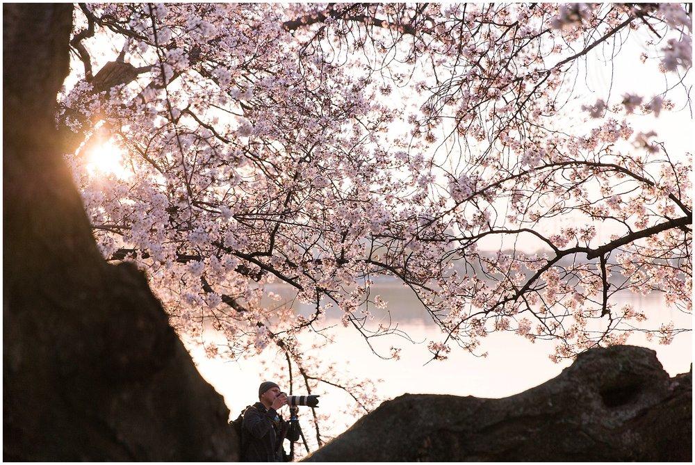 cherryblossom_washingtondc_spring_pink_0050.jpg