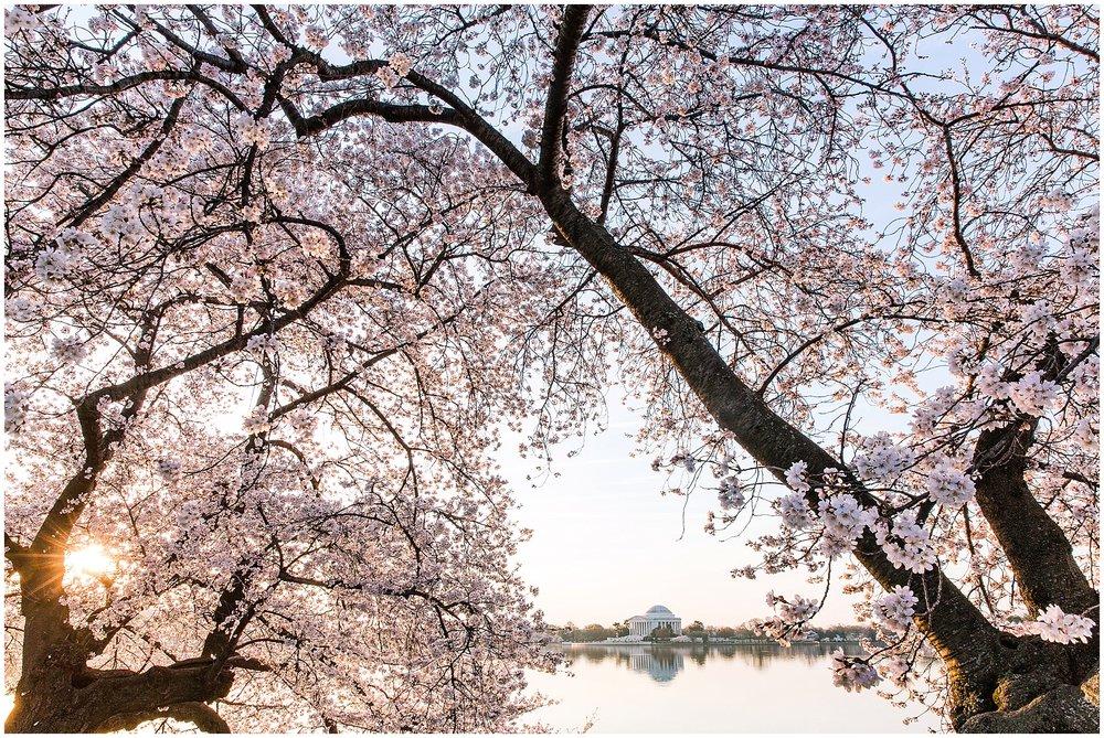 cherryblossom_washingtondc_spring_pink_0052.jpg
