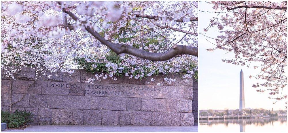 cherryblossom_washingtondc_spring_pink_0054.jpg