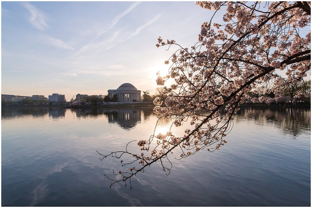 cherryblossom_washingtondc_spring_pink_0056.jpg