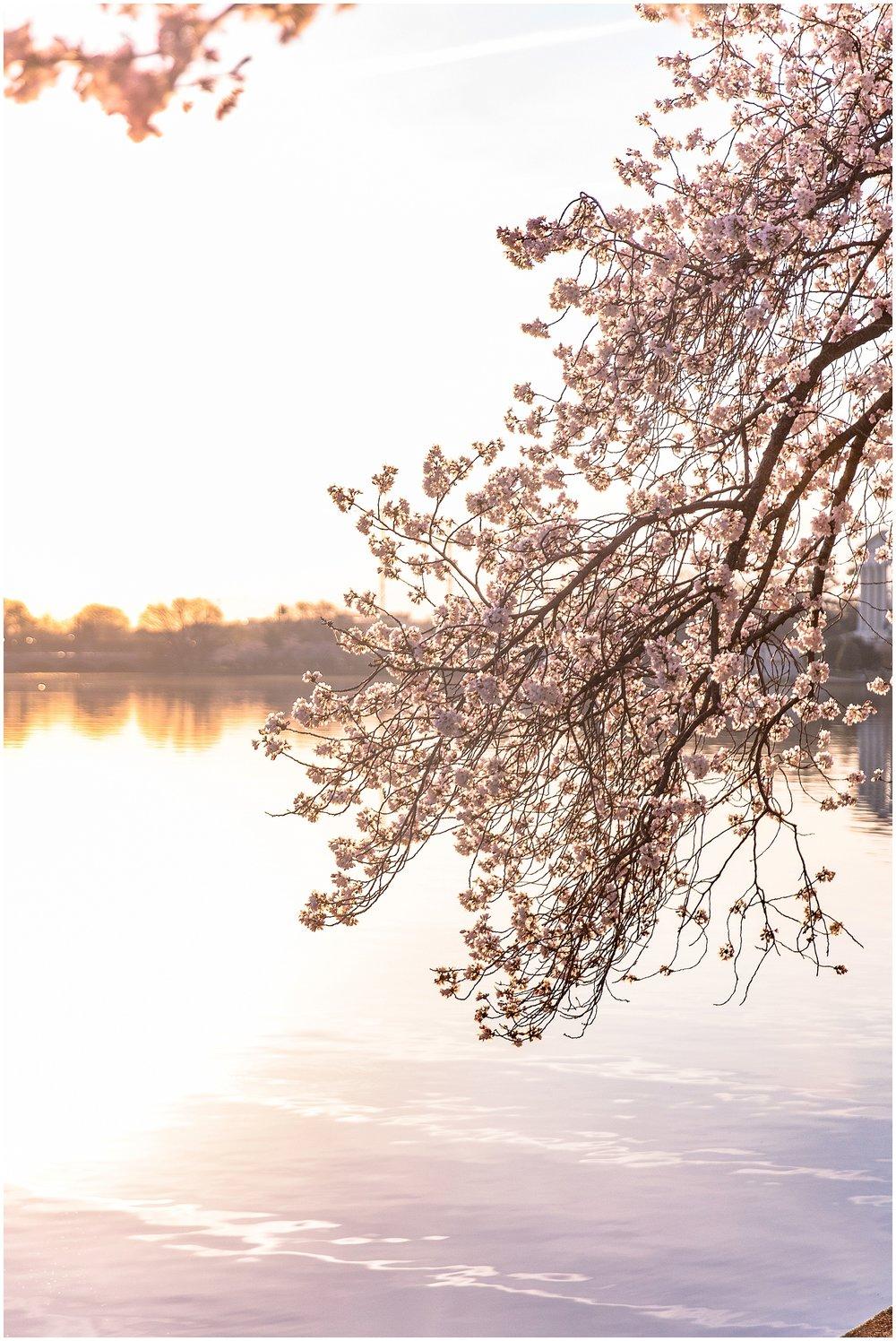 cherryblossom_washingtondc_spring_pink_0055.jpg