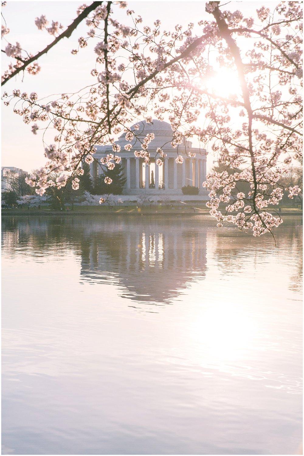 cherryblossom_washingtondc_spring_pink_0057.jpg