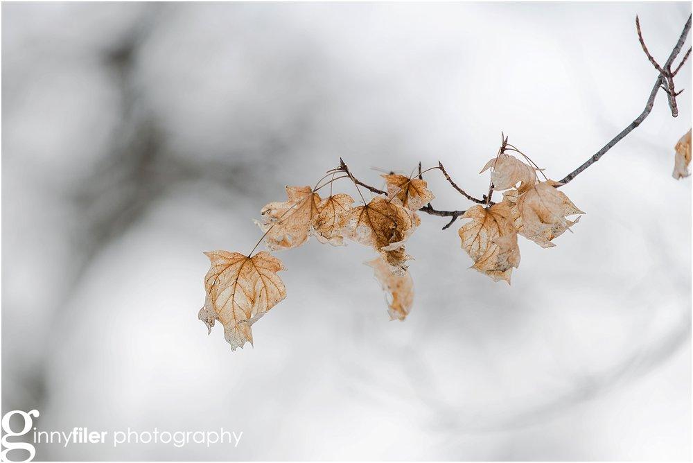 snow__VGF_2947_0004.jpg