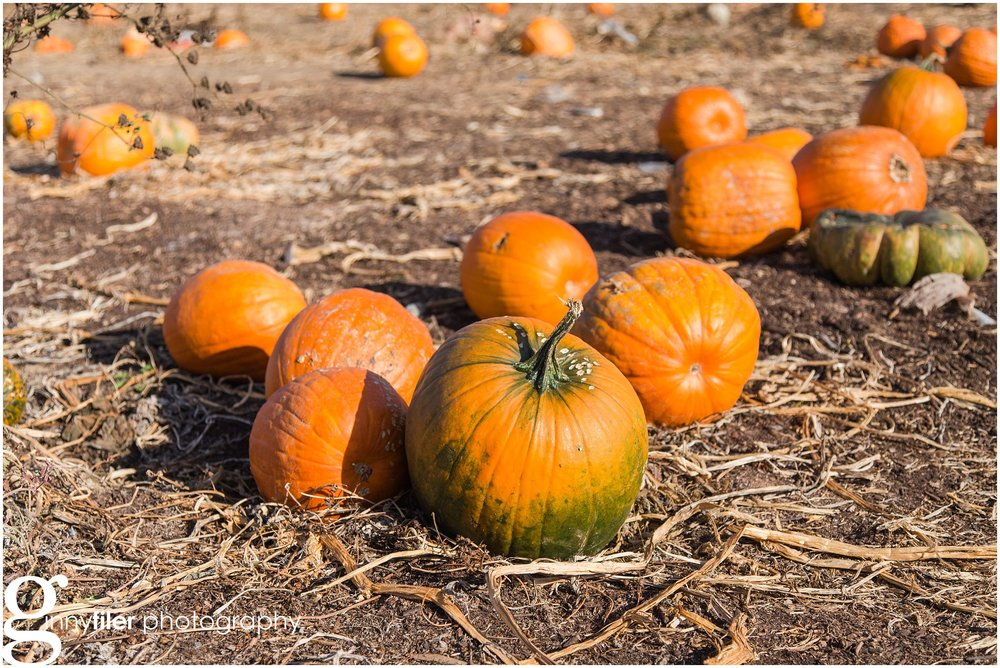 pumpkin_fall_0007.jpg