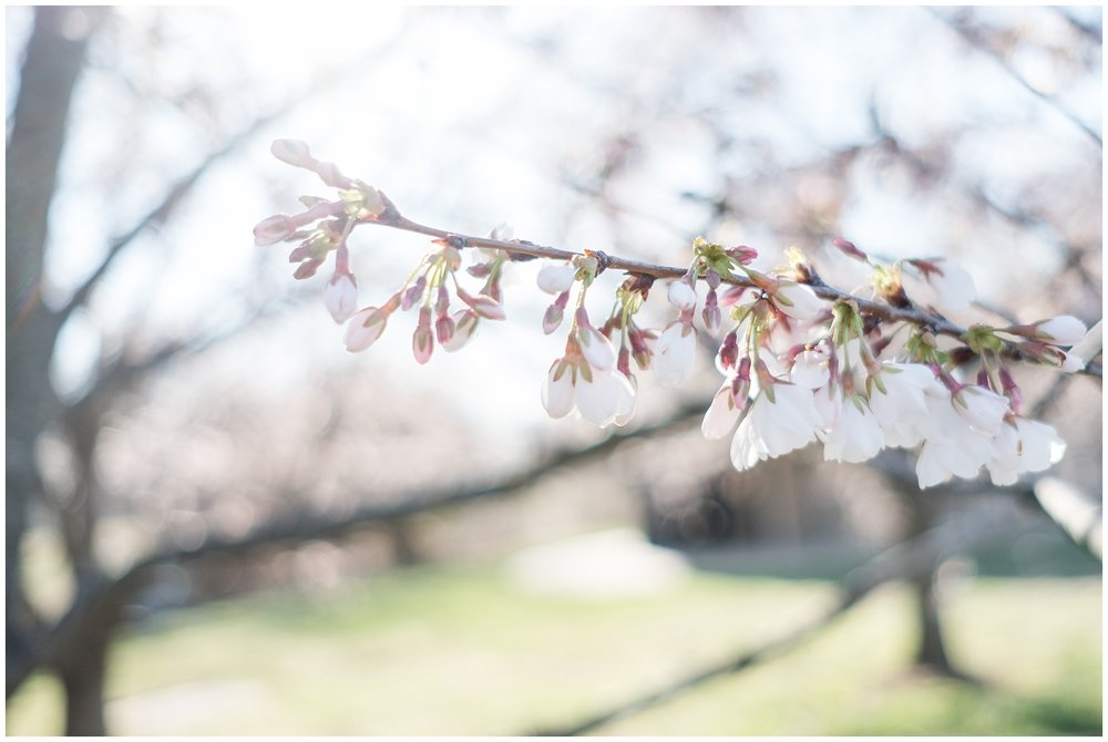 cherry_blossoms_0003.jpg