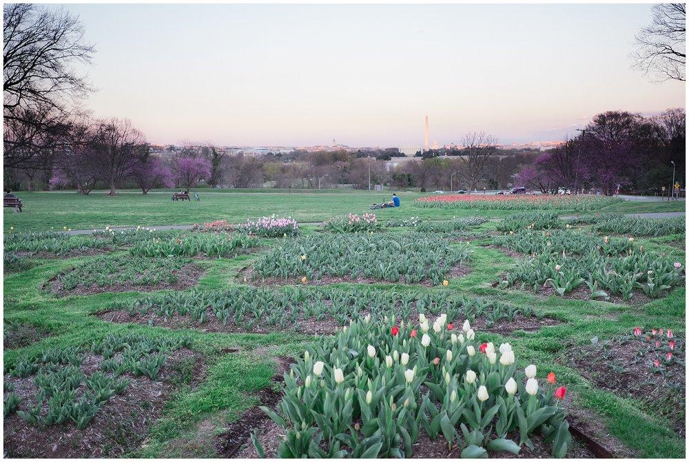 Tulips_WashingtonDC_0002.jpg