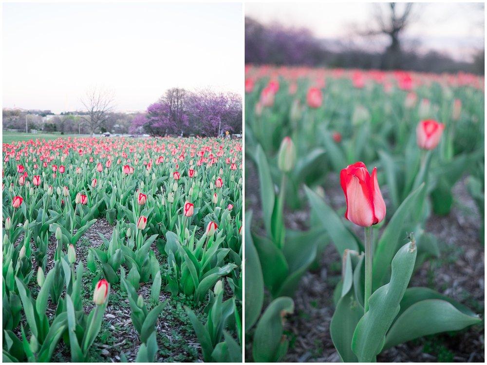 Tulips_WashingtonDC_0003.jpg