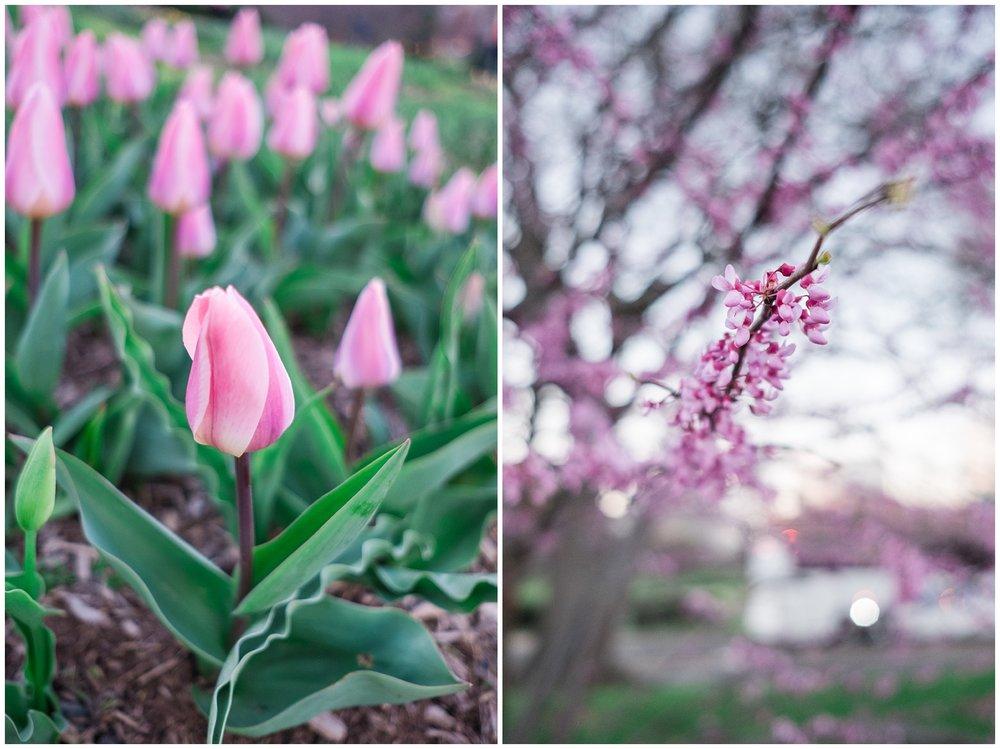 Tulips_WashingtonDC_0005.jpg