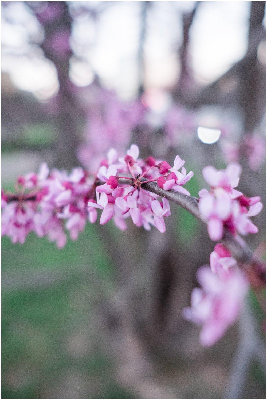 Tulips_WashingtonDC_0006.jpg
