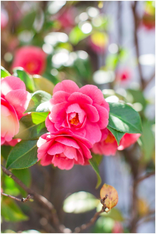 spring_flowers_April_0002.jpg