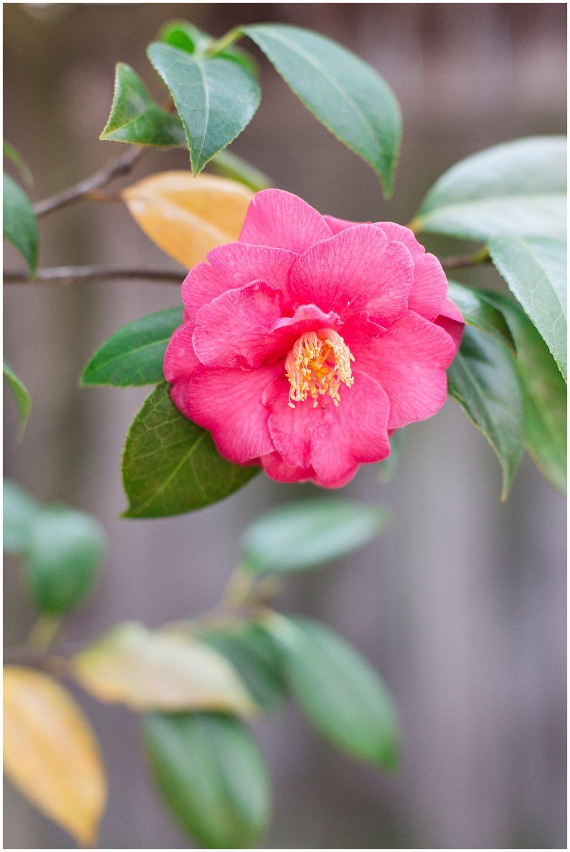 spring_flowers_April_0001.jpg