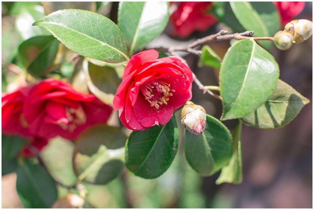 spring_flowers_April_0003.jpg