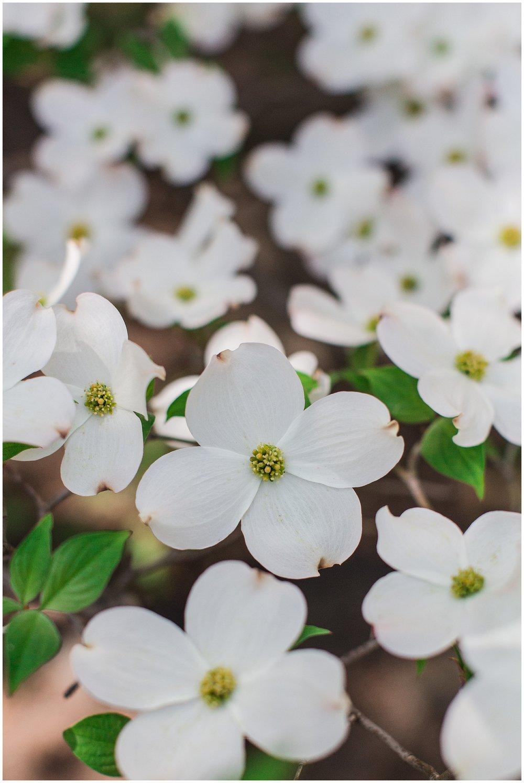 spring_flowers_April_0005.jpg