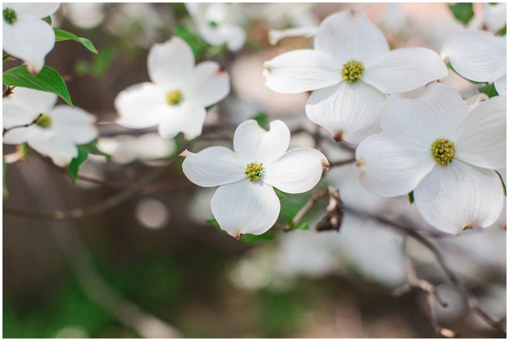 spring_flowers_April_0007.jpg