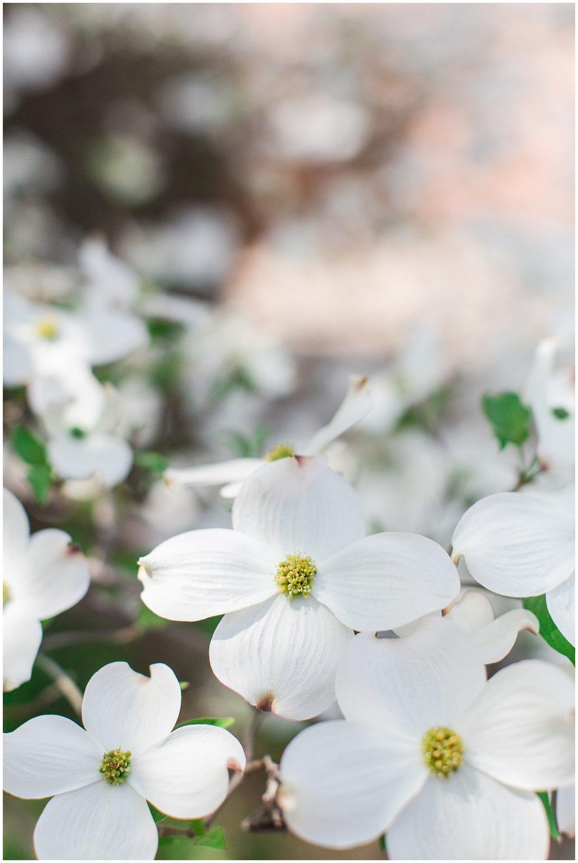 spring_flowers_April_0008.jpg