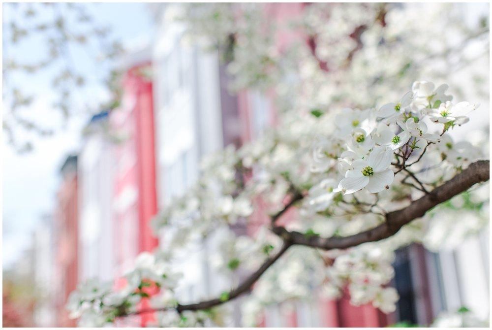 spring_flowers_April_0010.jpg