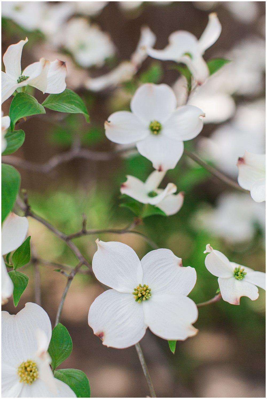 spring_flowers_April_0009.jpg
