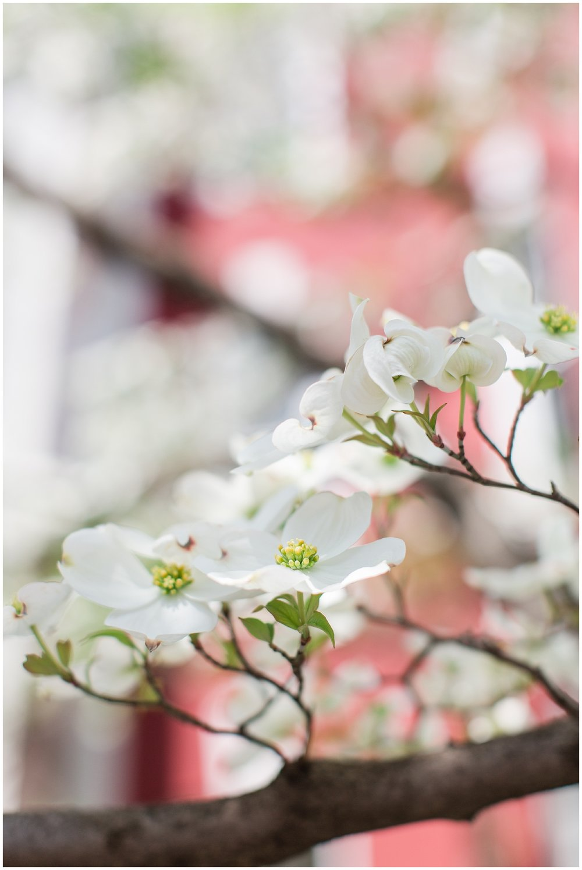 spring_flowers_April_0011.jpg