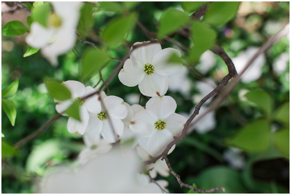 spring_flowers_April_0013.jpg