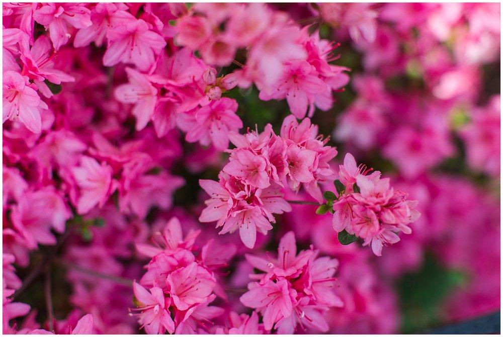 spring_flowers_April_0014.jpg