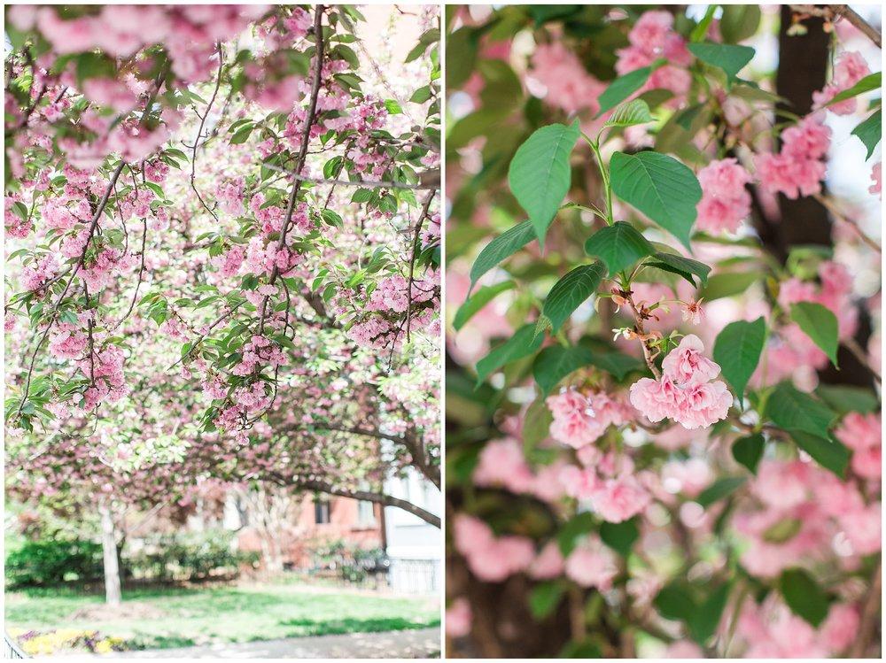 spring_flowers_April_0016.jpg