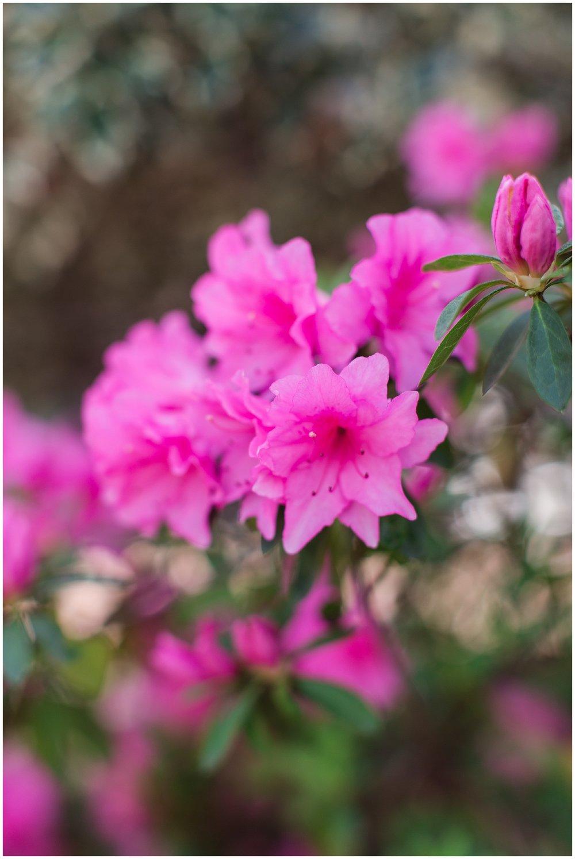 spring_flowers_April_0019.jpg