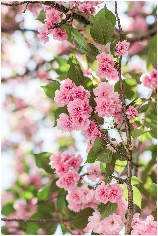 spring_flowers_April_0018.jpg