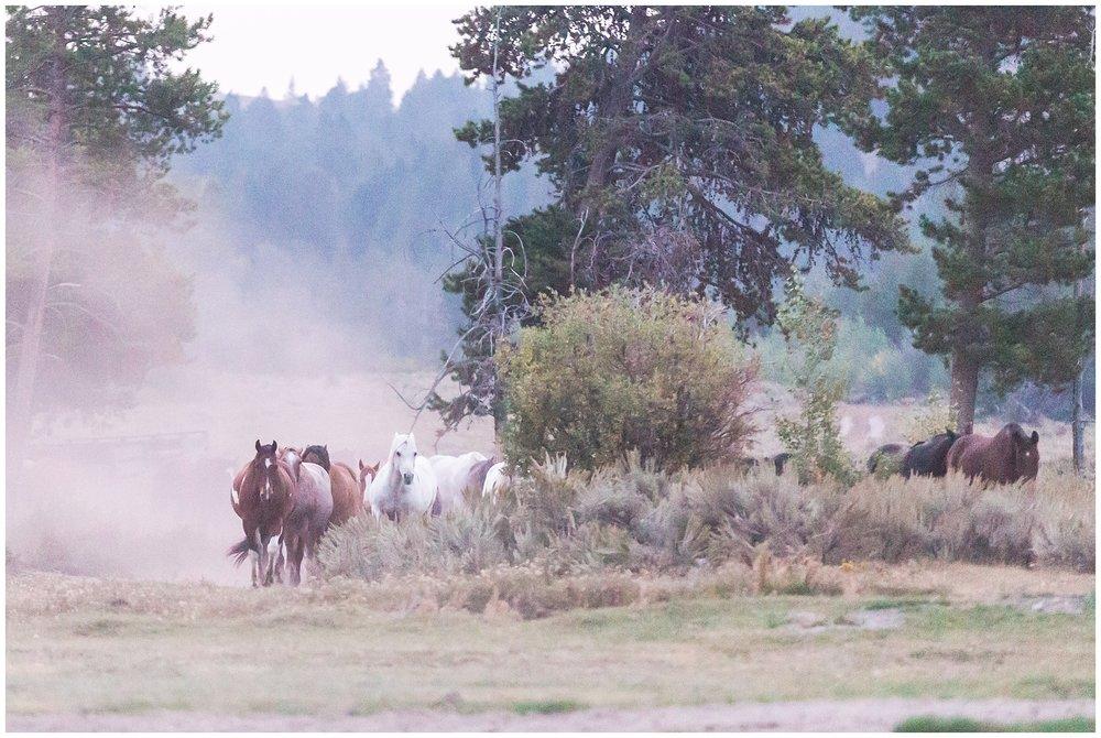 Ranch_Summer_0069.jpg