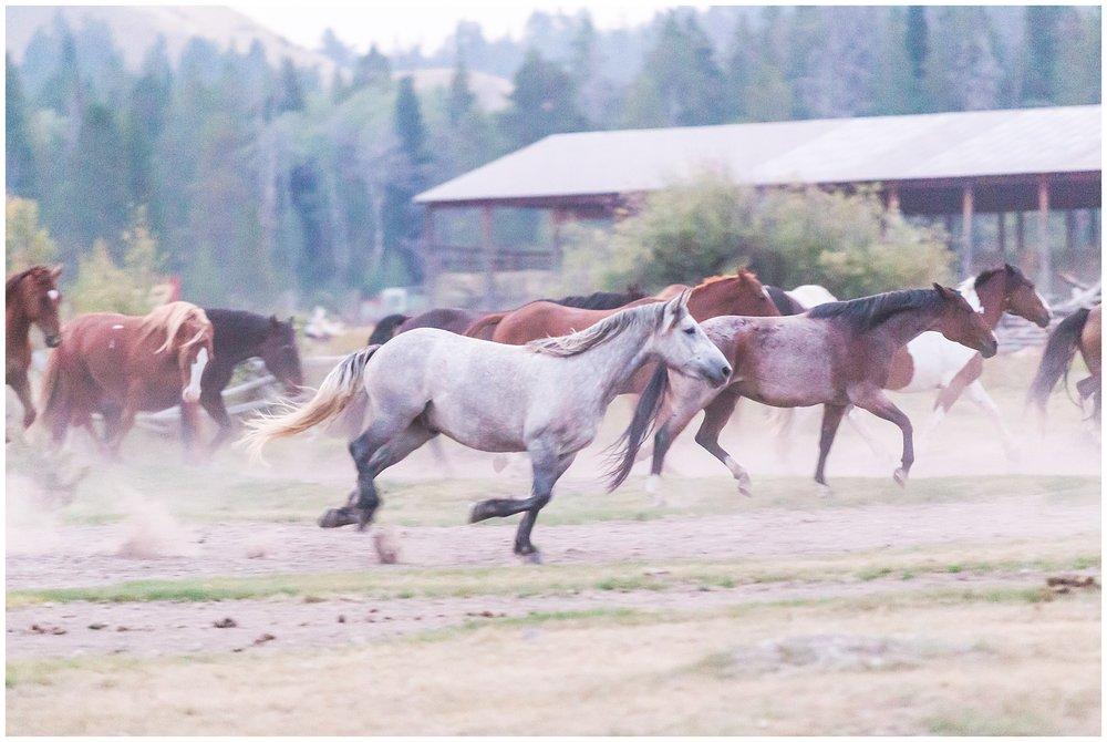 Ranch_Summer_0071.jpg
