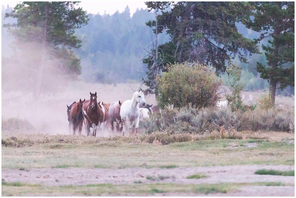 Ranch_Summer_0070.jpg
