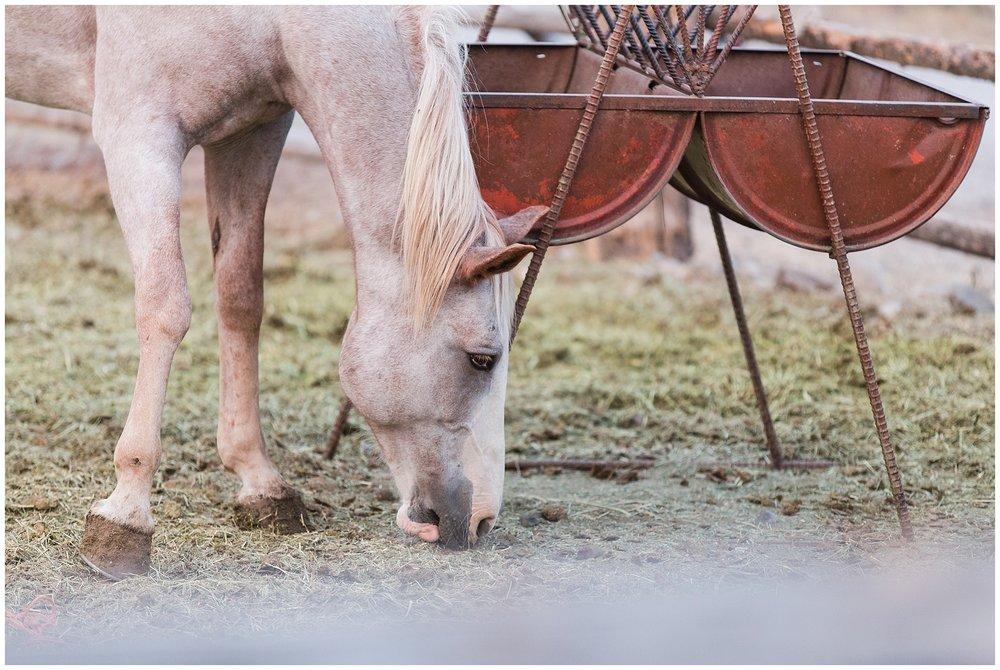 Ranch_Summer_0078.jpg