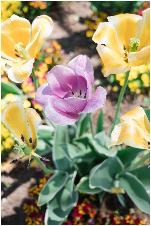 Arboretum_0011.jpg