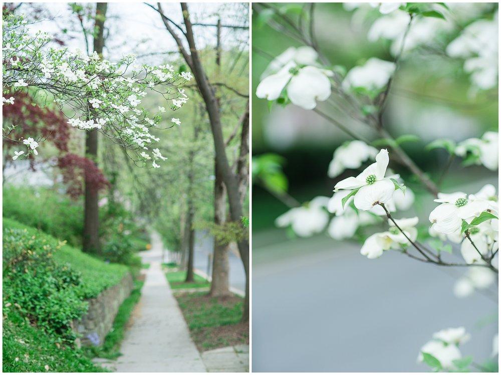 SpringWalk_0050.jpg