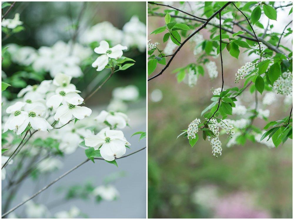 SpringWalk_0051.jpg