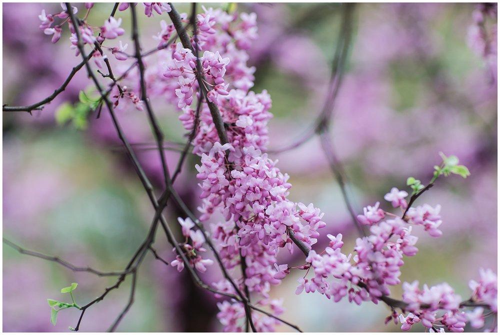 SpringWalk_0066.jpg