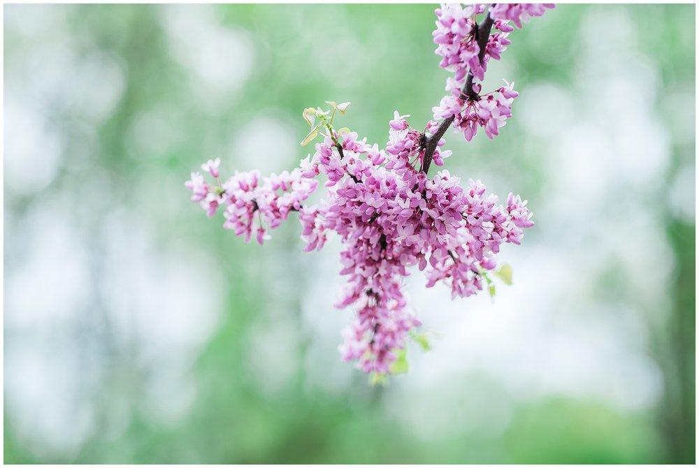 SpringWalk_0067.jpg