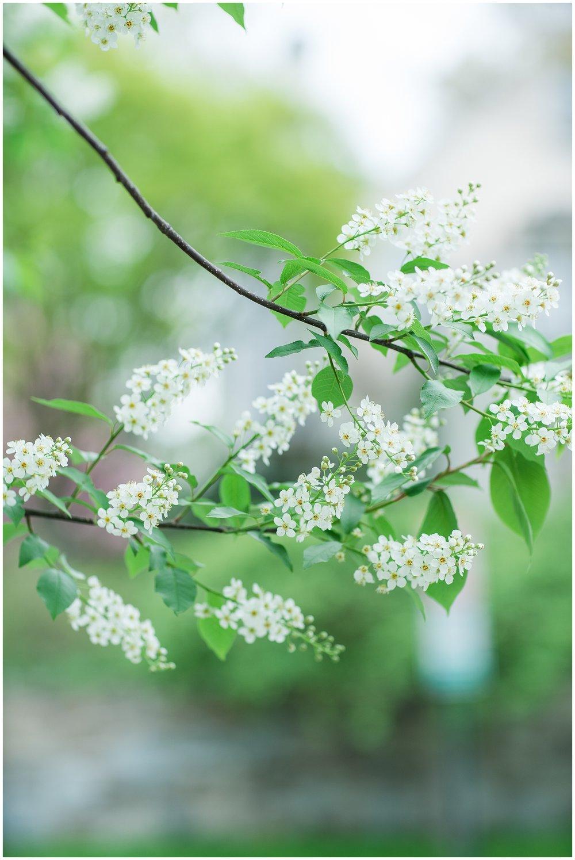 SpringWalk_0070.jpg