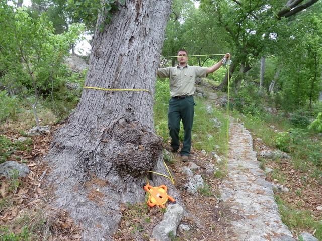 BIG TREE Workshop.jpg