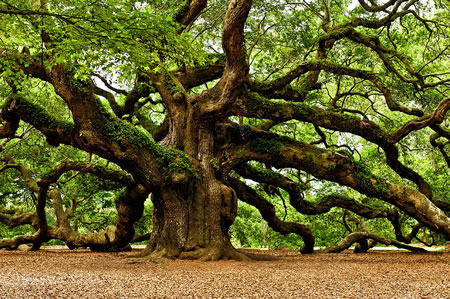 great-oak-2.jpg