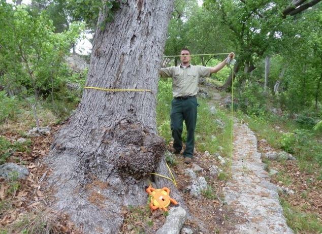 big tree workshop snip.JPG