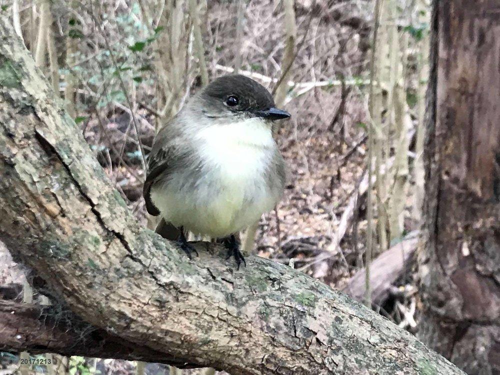 HIW bird 5.jpg