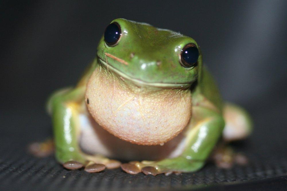 Life Cycle Activities - Frog Life Cycle