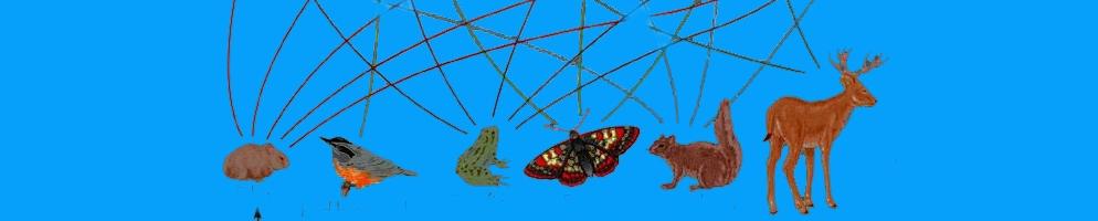 food web, ecosystem, ecology -