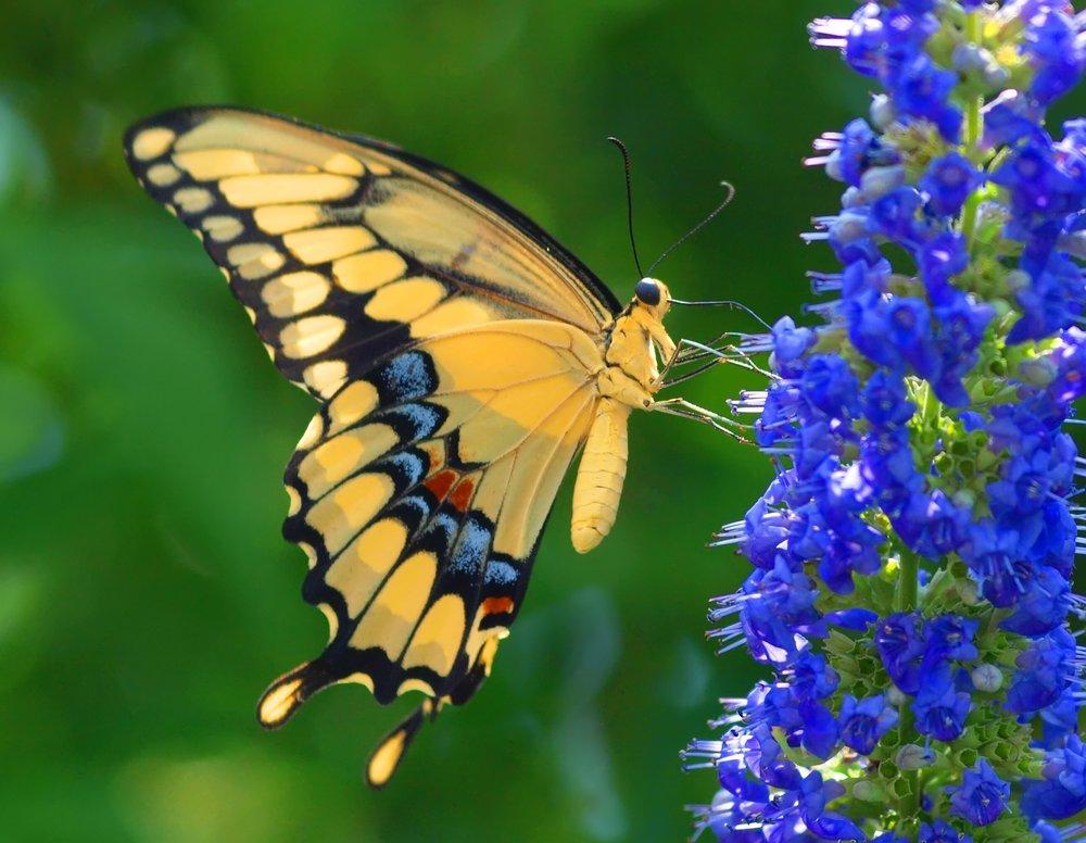 Other - Poetry of NatureButterfly MaskBat Mask
