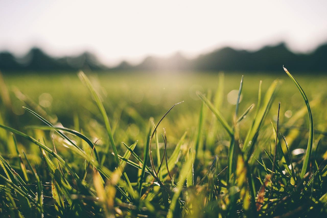 grass-916407_1280