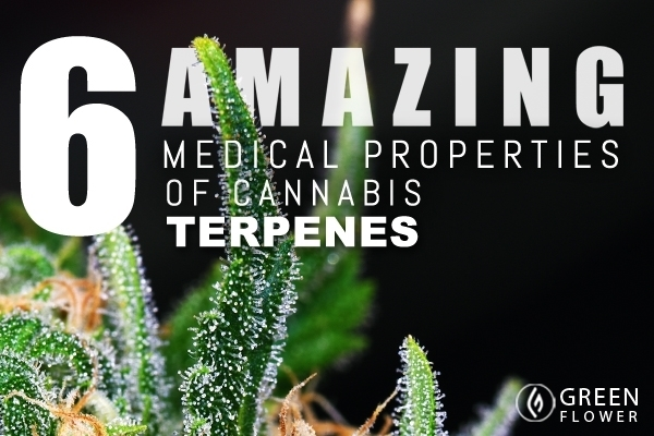 6 Amazing Medicinal Properties of Terpenes